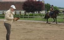 Cours équitation proposés par le domaine équestre d'Ilohé
